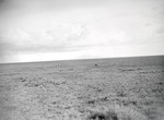 ETH-BIB-Löwen in der Serengeti-Kilimanjaroflug 1929-30-LBS MH02-07-0373.tif