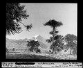 ETH-BIB-Vulkan Llanin mit Arancarien, Chile-Dia 247-02513-1.tif