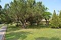 EUPHORIA PALM BEACH 5 (2015) - panoramio (14).jpg