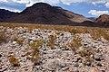 East bajada of Black Mountain - Flickr - aspidoscelis.jpg