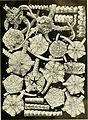 Echinodermata Ophiuroidea (1922) (20949638850).jpg