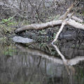 Econo River 03.jpg