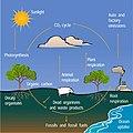 Ecosystem Respiration.jpg