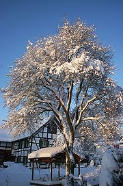 In winter the Eifel is often covered with snow