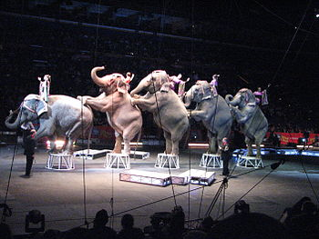 Elephants performing at the Ringling Bros. and...