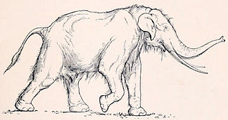Straight-tusked elephant - Illustration from 1916