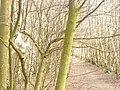 Elf in Baum (Elf in a Tree) - geo.hlipp.de - 34582.jpg