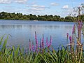 Ellesmere UK - panoramio - Tanya Dedyukhina.jpg