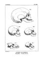 Encyclopédie méthodique - Systeme Anatomique, Pl17.png