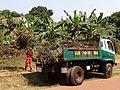 Entebbe Municipal Council Truck and Worker.jpg