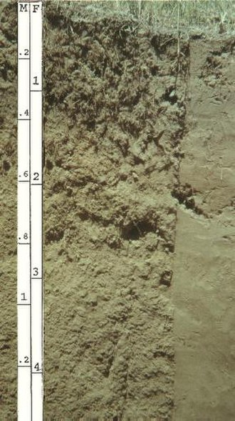 Entisol - Entisol profile showing little or no evidence of pedogenic horizon development