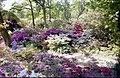 Exbury Gardens - geograph.org.uk - 779049.jpg