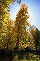 Fall colors at Dane Ridge (3985414972).jpg