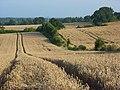 Farmland, Mortimer - geograph.org.uk - 956994.jpg
