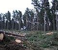 Felling trees in Yateley Heath Wood - geograph.org.uk - 748795.jpg