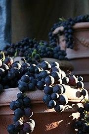 Cotto e uva