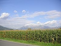 external image 200px-Field%2C_corn%2C_Liechtenstein%2C_Mountains%2C_Alps%2C_Vaduz%2C_sky%2C_clouds%2C_landscape.jpg
