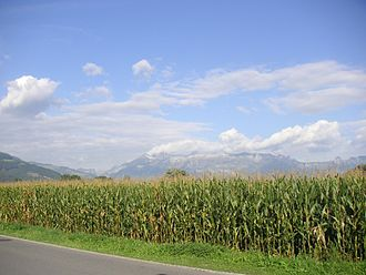 Dent corn - Corn, shown here grown in Liechtenstein, is cultivated as a row crop.