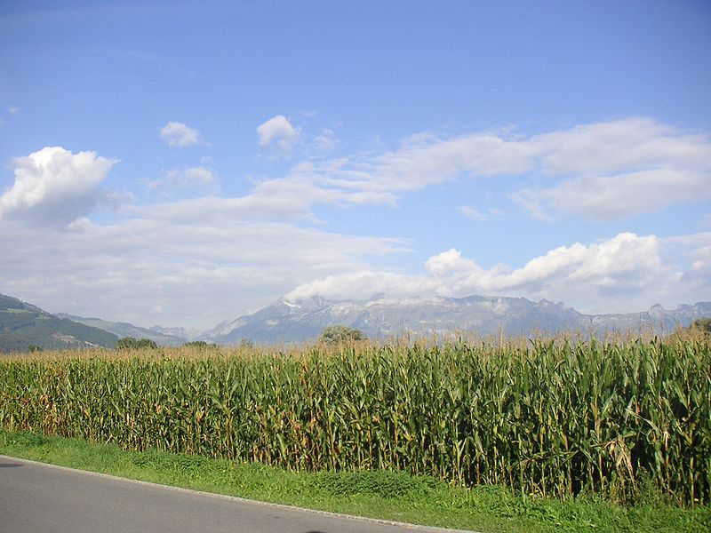 File:Field, corn, Liechtenstein, Mountains, Alps, Vaduz, sky, clouds, landscape.jpg