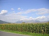Field of maize in Liechtenstein