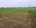 Field near Moat Farm - geograph.org.uk - 300458.jpg