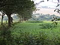 Fields north of Trethowa - geograph.org.uk - 572781.jpg