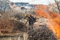 Fire fighters use drip torches to light vegetation piles in upper Courthouse Wash. These piles are accumulations of plant (8b2c0f79-2e9e-4c22-934b-0b995174280a).jpg