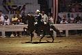 Five Gaited horse Racking (7714704408).jpg