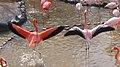 Flamingo01 960.jpg