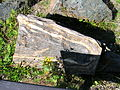 Flickr - brewbooks - Cascade River Schist.jpg