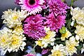 Flickr - ronsaunders47 - BLOOMS UP CLOSE. 1.jpg