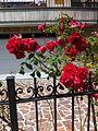 Flora of Esino Lario 10.jpg