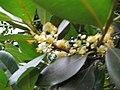 Floresdeguanandi.jpg