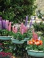 Flower-center134007.jpg