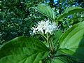 Flower white2.JPG