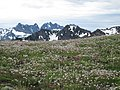 Flowers mountains scenic BBaccus (17276156246).jpg