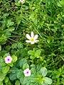 Flowers of Baghdad 29.jpg