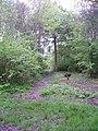 Footpath in Combs Wood - geograph.org.uk - 1299854.jpg