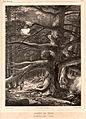 Forêt de pins.jpg