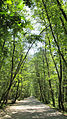 ForestParkGysum.JPG