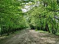Forest - panoramio - paulnasca (16).jpg