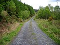 Forest Track in Bargaly Glen - geograph.org.uk - 431692.jpg
