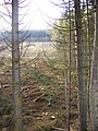 Forest being felled - geograph.org.uk - 594243.jpg
