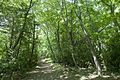 Forest in Mt.Nandai 01.jpg