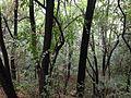 Forest on Mount Longwangshan in Huangzhou, Huanggang, Hubei.JPG
