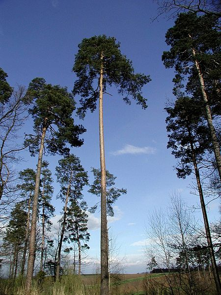 Stromy na okraji lesa