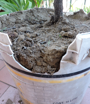 Photodegradation - Photodegradation of a plastic bucket used as an open-air flowerpot for some years