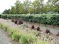 Franciscan Winery, St. Helena, California, USA (6969874707).jpg