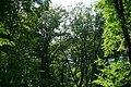 Fußweg Felsengarten Sanspareil 04082019 049.jpg