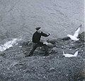 Fuglefangst på Færøerne.jpg